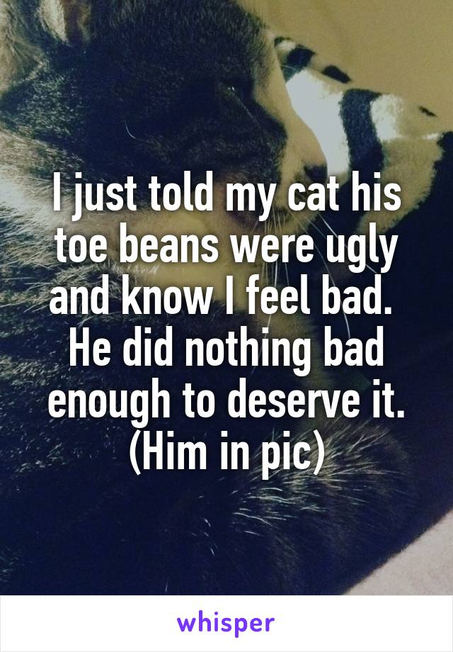 I just told my cat his toe beans were ugly and know I feel bad.  He did nothing bad enough to deserve it. (Him in pic)