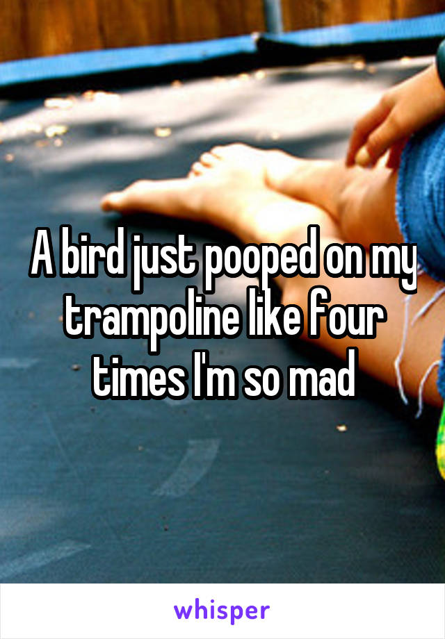 A bird just pooped on my trampoline like four times I'm so mad