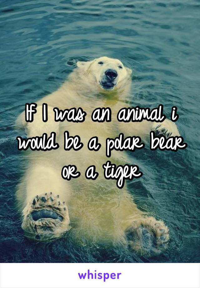 If I was an animal i would be a polar bear or a tiger