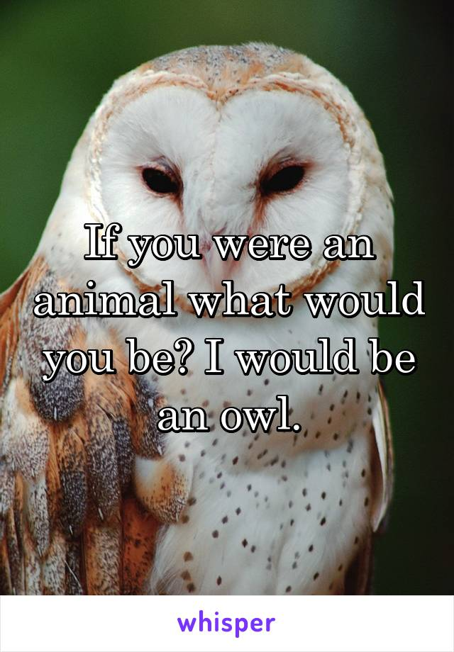 If you were an animal what would you be? I would be an owl.