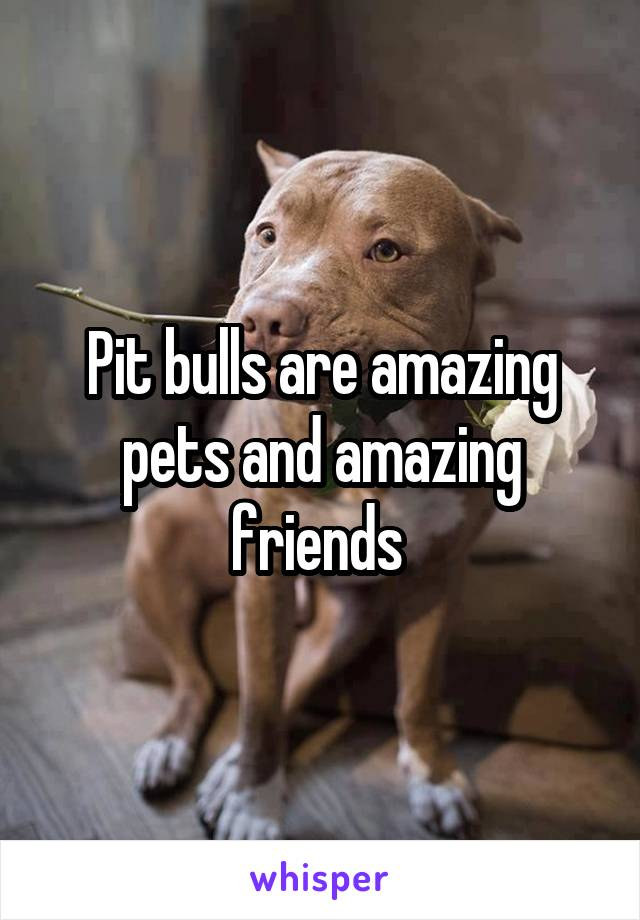 Pit bulls are amazing pets and amazing friends