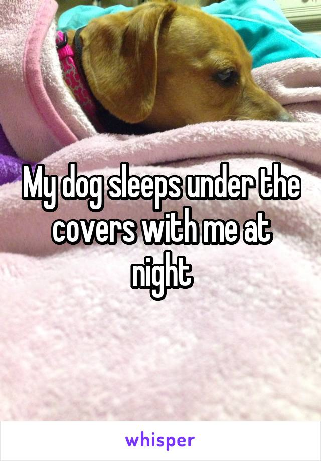 My dog sleeps under the covers with me at night