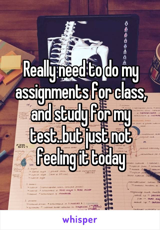 Really need to do my assignments for class, and study for my test..but just not feeling it today