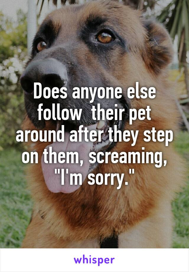 "Does anyone else follow  their pet around after they step on them, screaming, ""I'm sorry."""