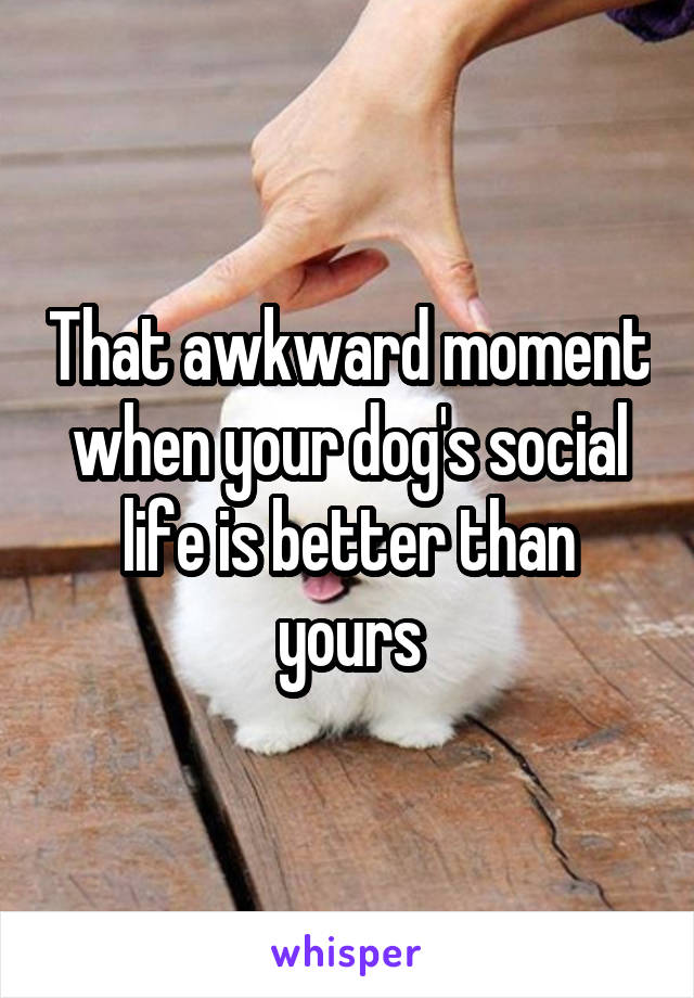 That awkward moment when your dog's social life is better than yours