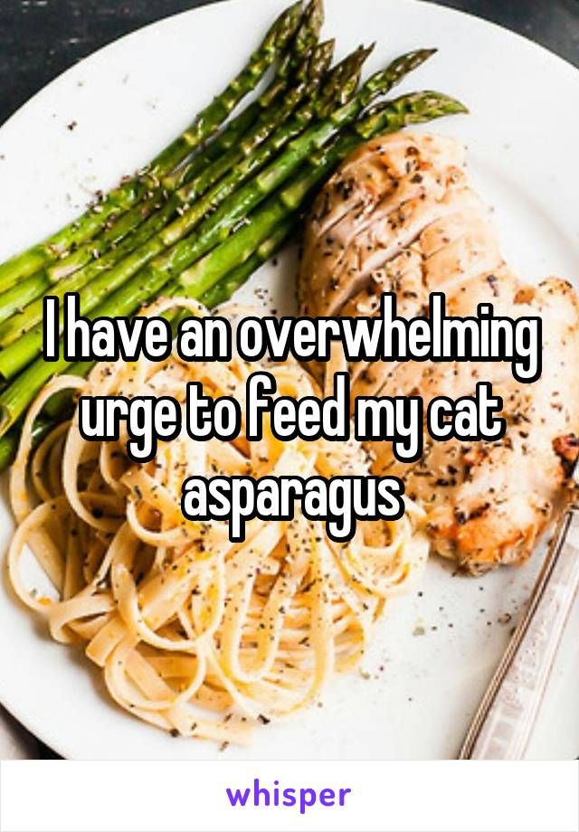 I have an overwhelming urge to feed my cat asparagus