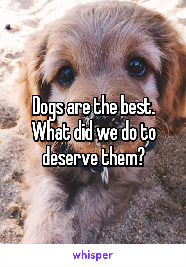 Dogs are the best. What did we do to deserve them?
