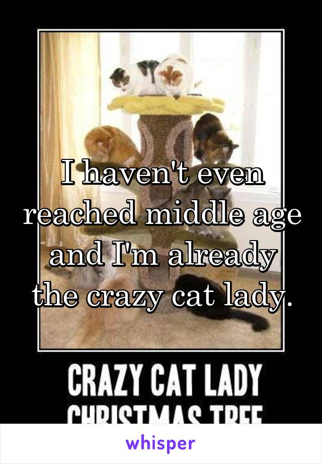 I haven't even reached middle age and I'm already the crazy cat lady.
