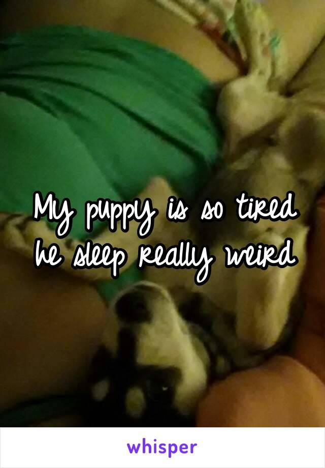 My puppy is so tired he sleep really weird