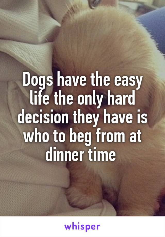 Dogs have the easy life the only hard decision they have is who to beg from at dinner time