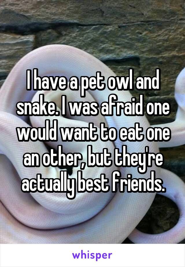 I have a pet owl and snake. I was afraid one would want to eat one an other, but they're actually best friends.