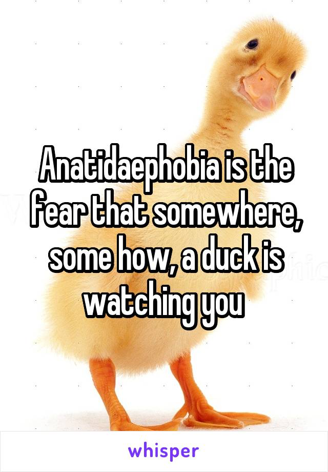 Anatidaephobia is the fear that somewhere, some how, a duck is watching you