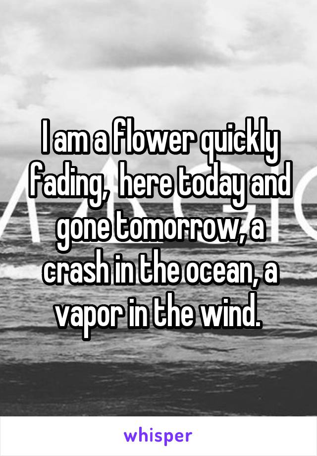 I am a flower quickly fading,  here today and gone tomorrow, a crash in the ocean, a vapor in the wind.