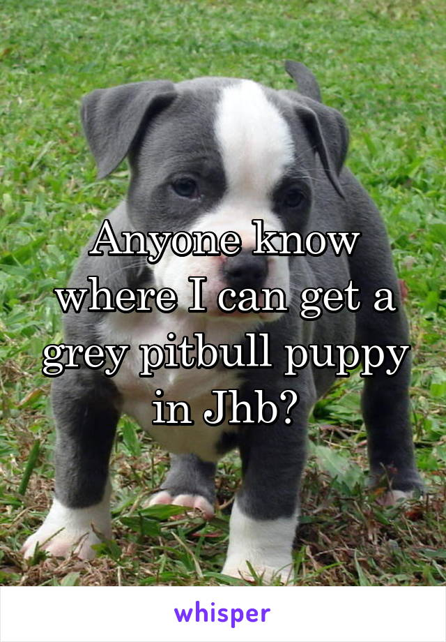 Anyone know where I can get a grey pitbull puppy in Jhb?