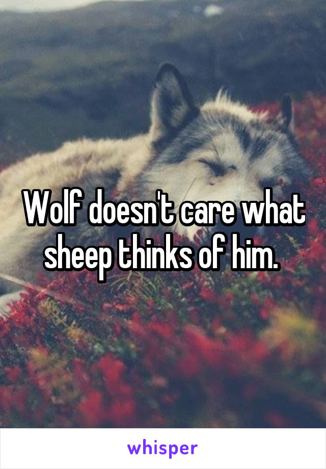 Wolf doesn't care what sheep thinks of him.