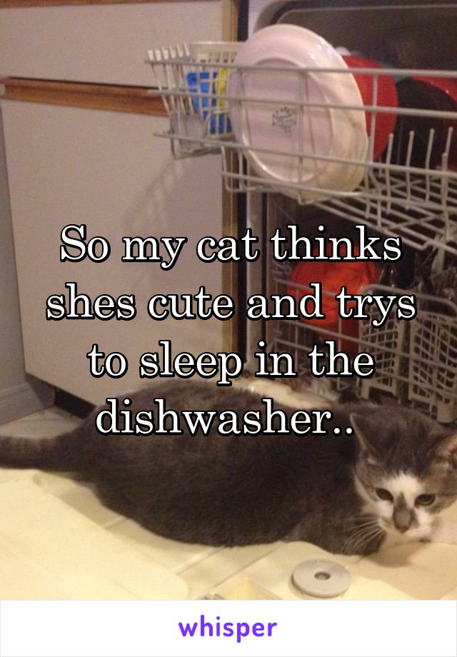 So my cat thinks shes cute and trys to sleep in the dishwasher..