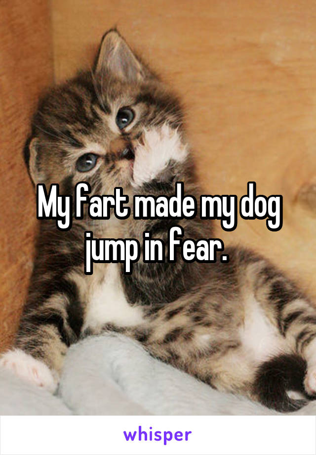 My fart made my dog jump in fear.