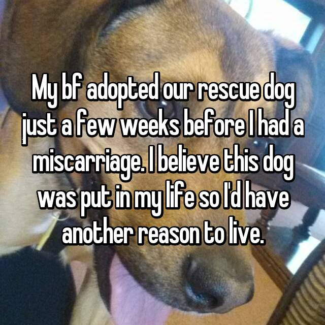 My bf adopted our rescue dog just a few weeks before I had a miscarriage. I believe this dog was put in my life so I'd have another reason to live.