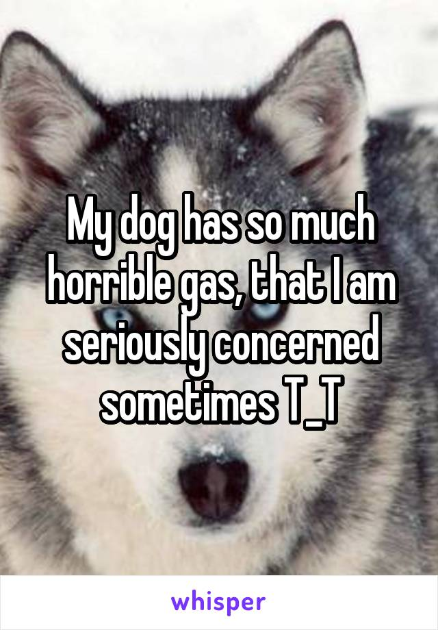 My dog has so much horrible gas, that I am seriously concerned sometimes T_T