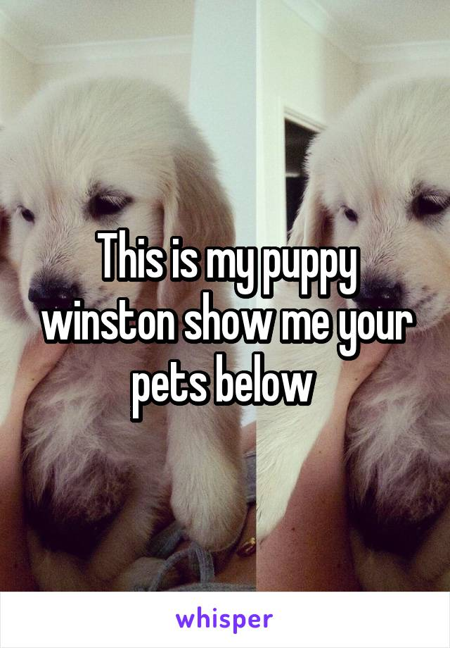 This is my puppy winston show me your pets below