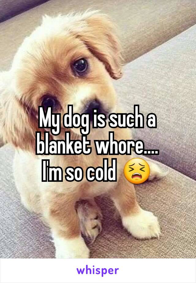 My dog is such a blanket whore.... I'm so cold 😣