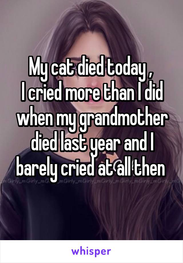 My cat died today ,  I cried more than I did when my grandmother died last year and I barely cried at all then