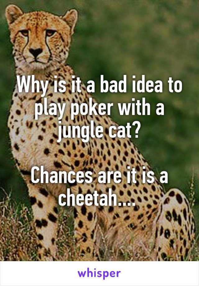 Why is it a bad idea to play poker with a jungle cat?  Chances are it is a cheetah....