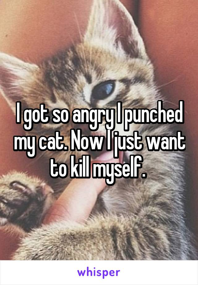 I got so angry I punched my cat. Now I just want to kill myself.