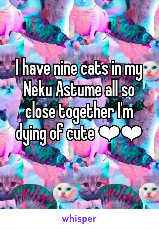 I have nine cats in my Neku Astume all so close together I'm dying of cute ❤❤