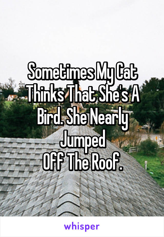 Sometimes My Cat Thinks That She's A Bird. She Nearly Jumped Off The Roof.