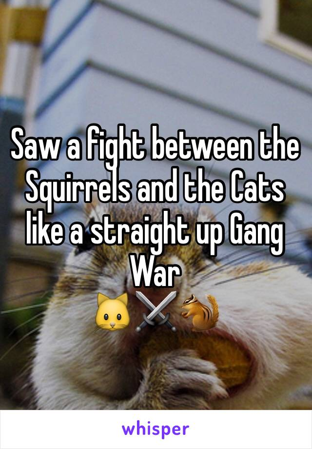 Saw a fight between the Squirrels and the Cats like a straight up Gang War    🐱⚔🐿