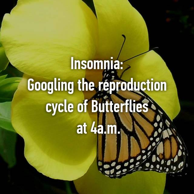 Insomnia: Googling the reproduction cycle of Butterflies  at 4a.m.