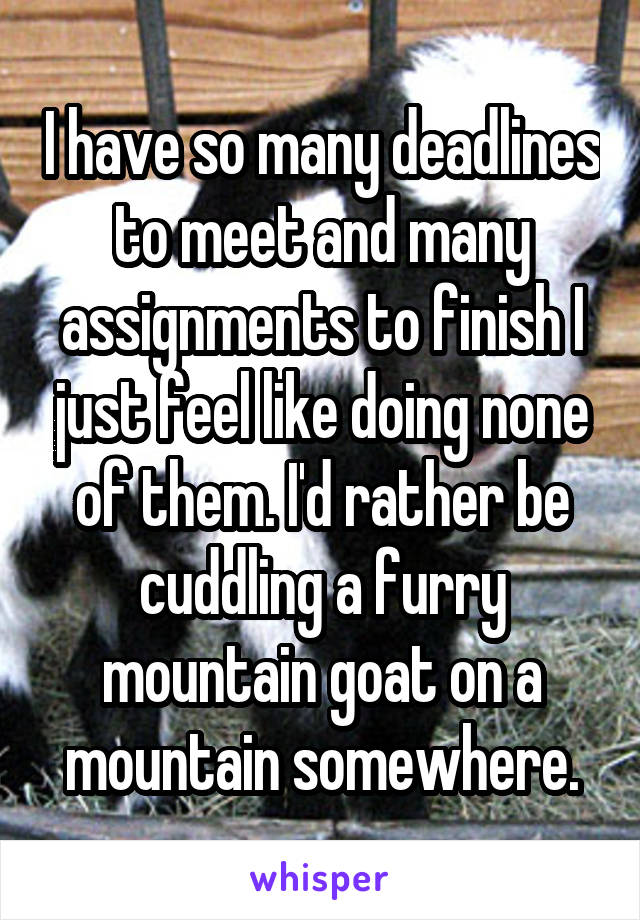 I have so many deadlines to meet and many assignments to finish I just feel like doing none of them. I'd rather be cuddling a furry mountain goat on a mountain somewhere.