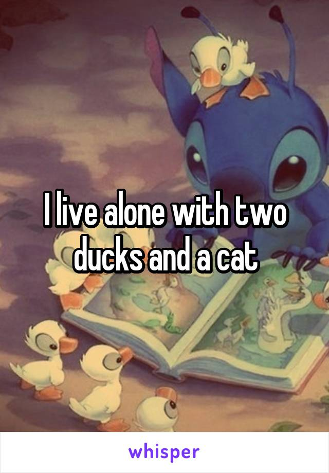 I live alone with two ducks and a cat