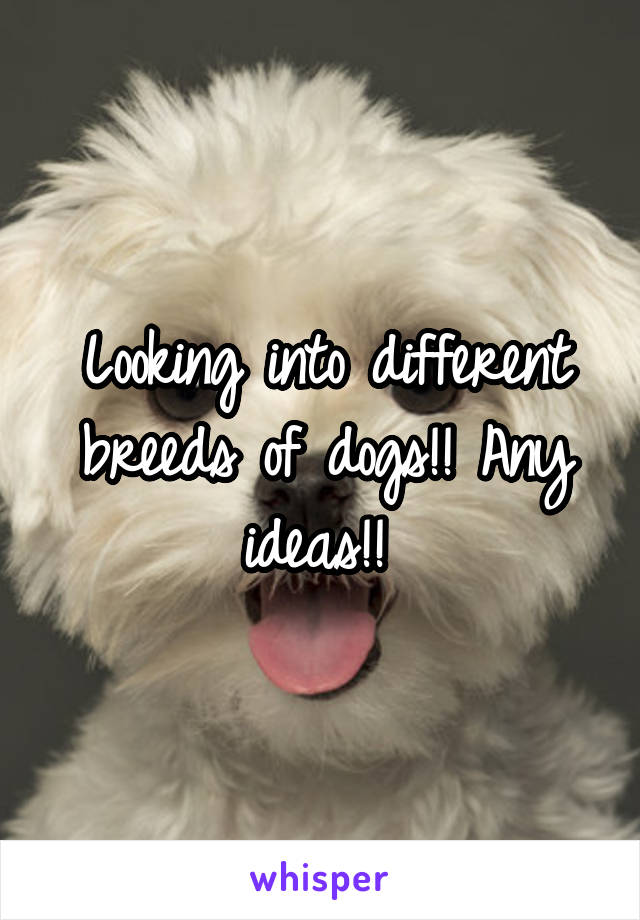 Looking into different breeds of dogs!! Any ideas!!