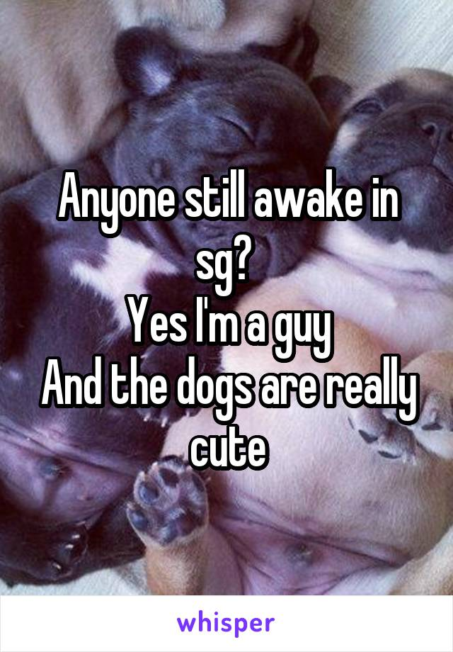 Anyone still awake in sg?  Yes I'm a guy And the dogs are really cute