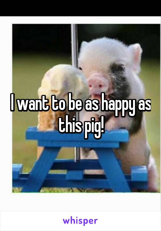 I want to be as happy as this pig!