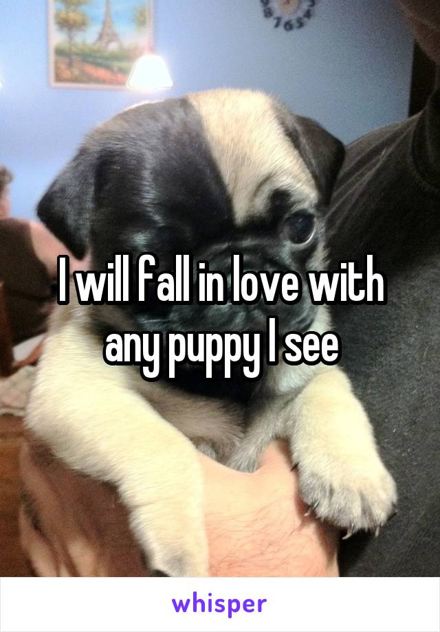 I will fall in love with any puppy I see