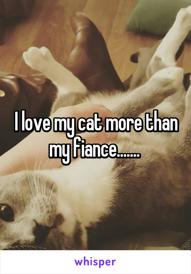 I love my cat more than my fiance.......