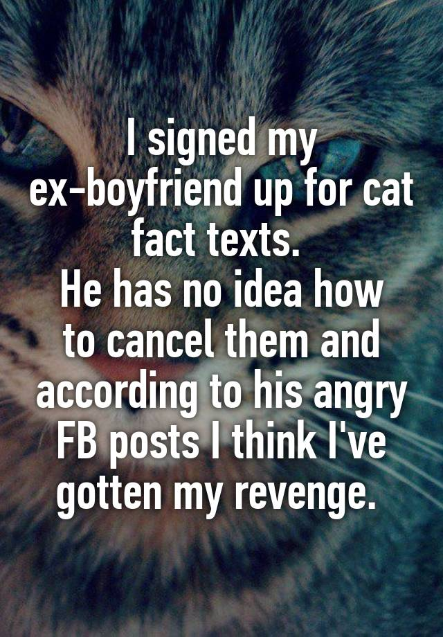 i signed my ex boyfriend up for cat fact texts he has no idea how
