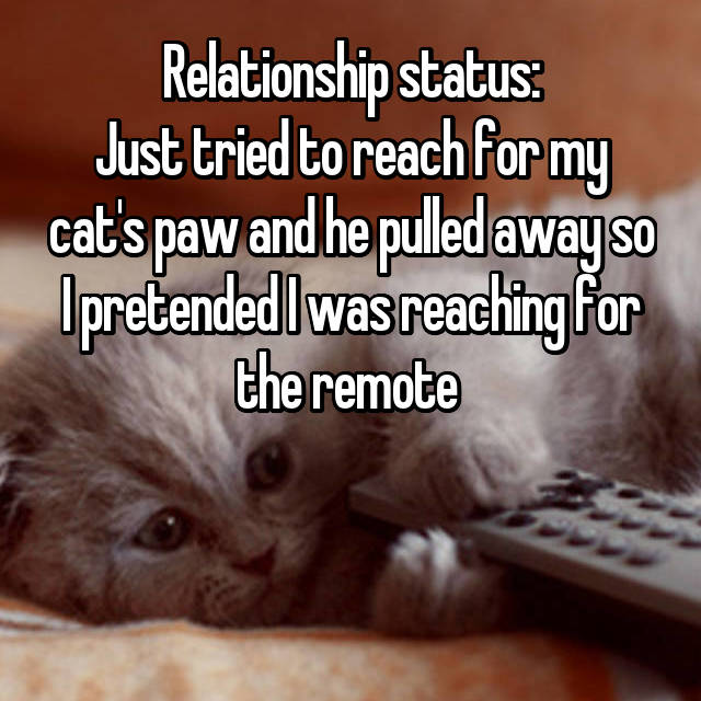 Relationship status: Just tried to reach for my cat's paw and he pulled away so I pretended I was reaching for the remote
