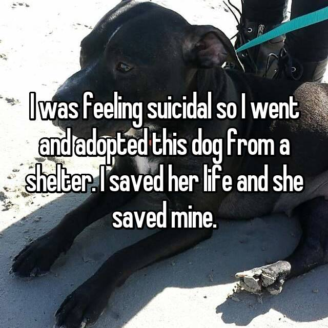 I was feeling suicidal so I went and adopted this dog from a shelter. I saved her life and she saved mine.