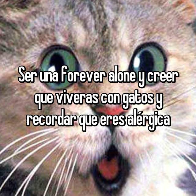 Ser una forever alone y creer que viveras con gatos y recordar que eres alérgica