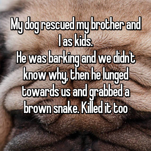My dog rescued my brother and I as kids. He was barking and we didn't know why, then he lunged towards us and grabbed a brown snake. Killed it too