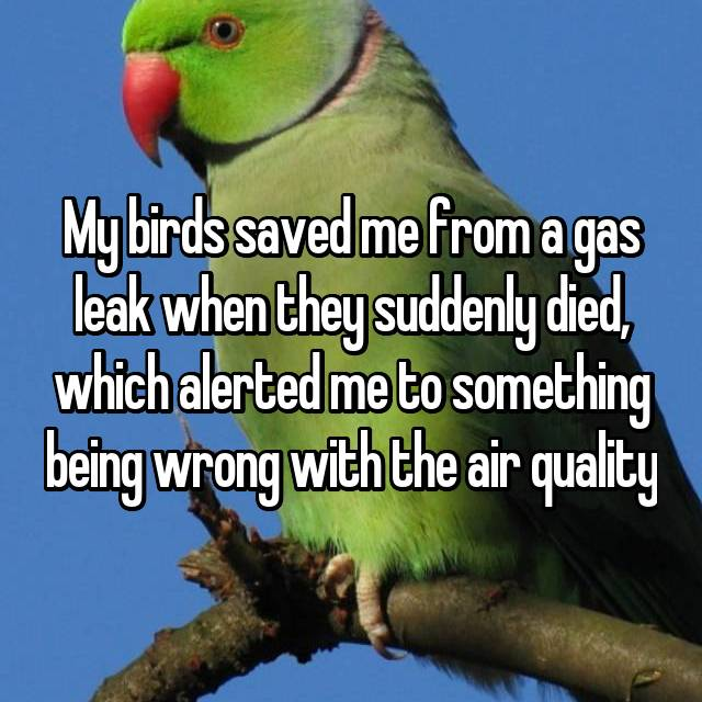 My birds saved me from a gas leak when they suddenly died, which alerted me to something being wrong with the air quality