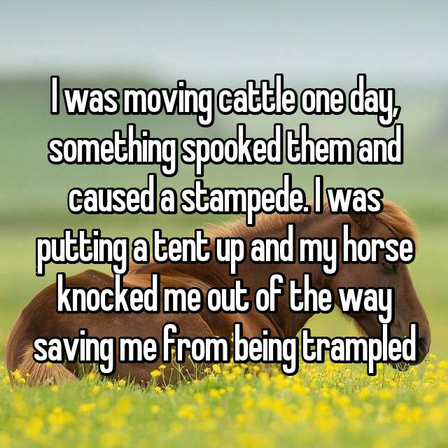 I was moving cattle one day, something spooked them and caused a stampede. I was putting a tent up and my horse knocked me out of the way saving me from being trampled