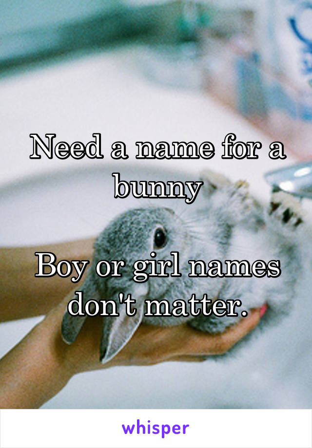 Need a name for a bunny  Boy or girl names don't matter.