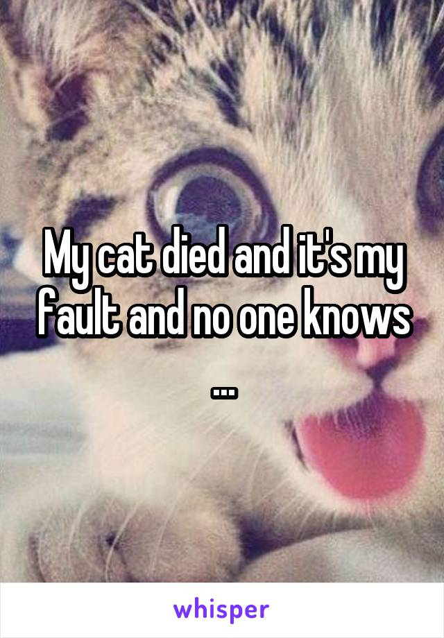 My cat died and it's my fault and no one knows ...