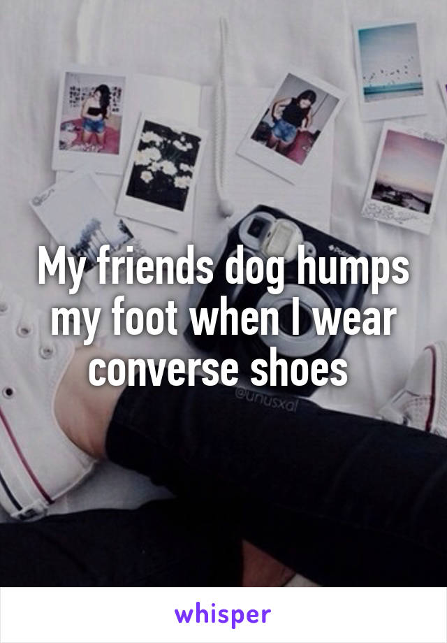 My friends dog humps my foot when I wear converse shoes