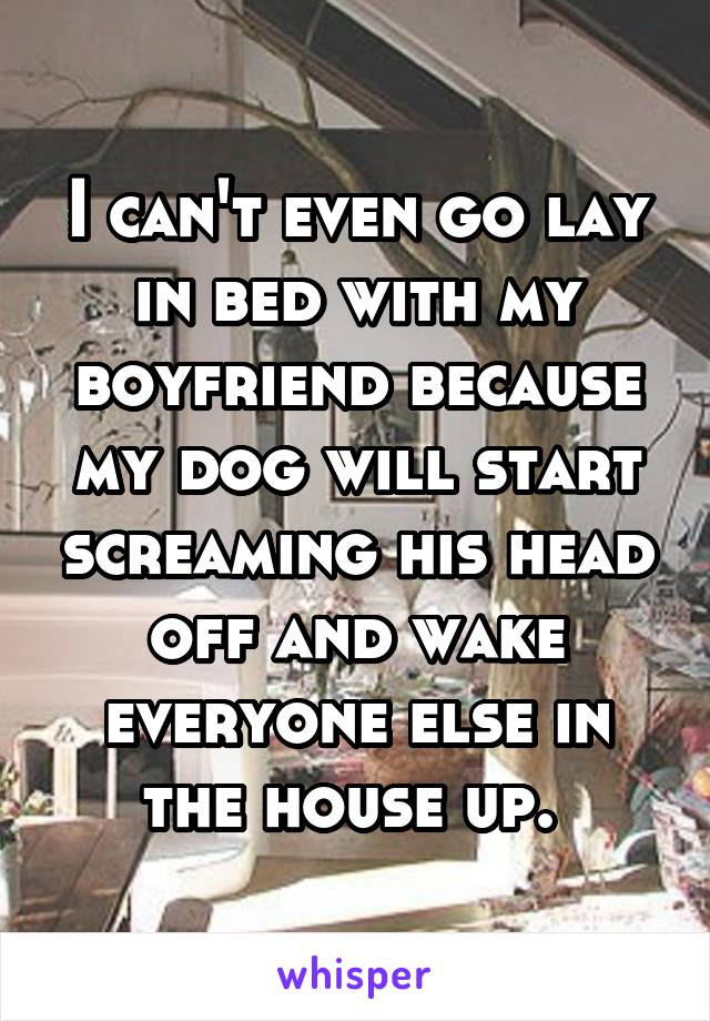 I can't even go lay in bed with my boyfriend because my dog will start screaming his head off and wake everyone else in the house up.
